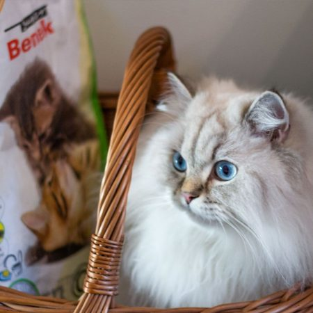 Naturalny żwirek Super Benek Corn Cat